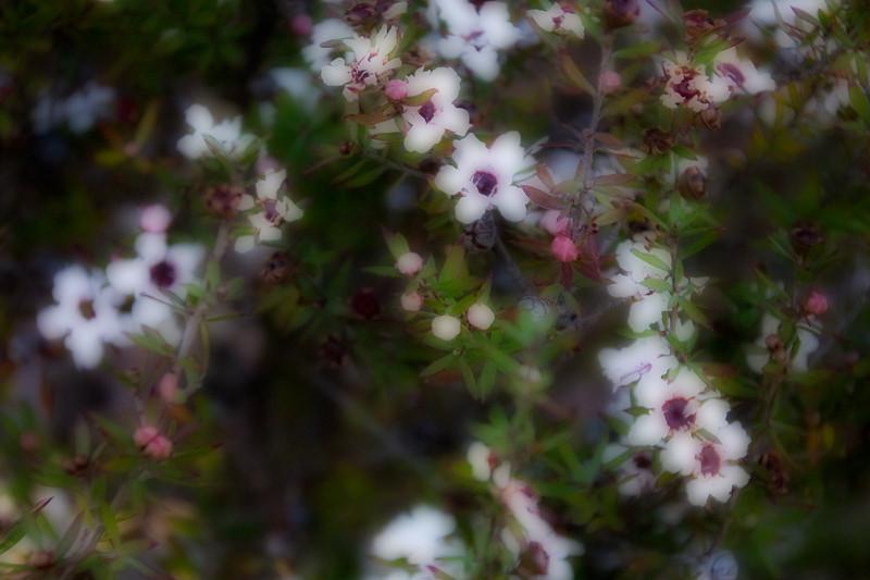 January 23 - White flowers