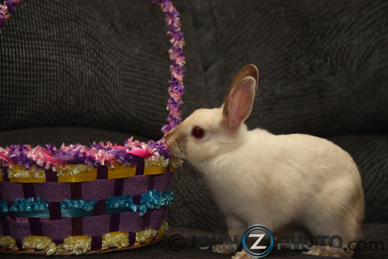 Easter Bunny 2010