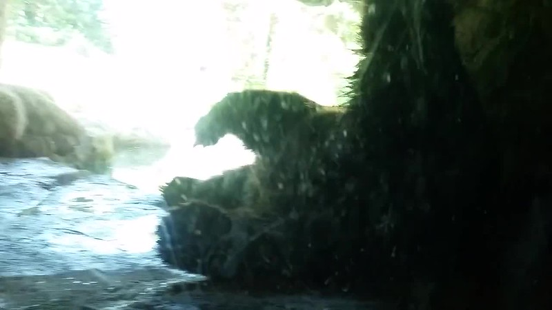 Woodland Park Zoo 2016_3.mp4