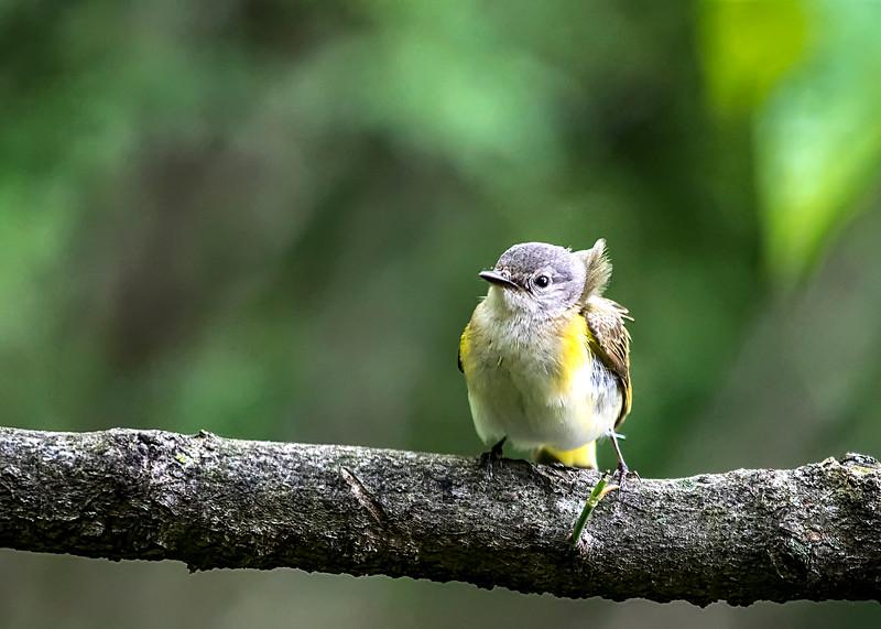 YoungBird_01.jpg