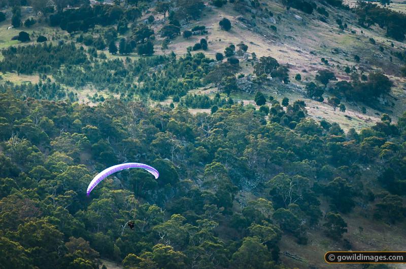 A paraglider soars over the north-eastern slopes of Mt Alexander.