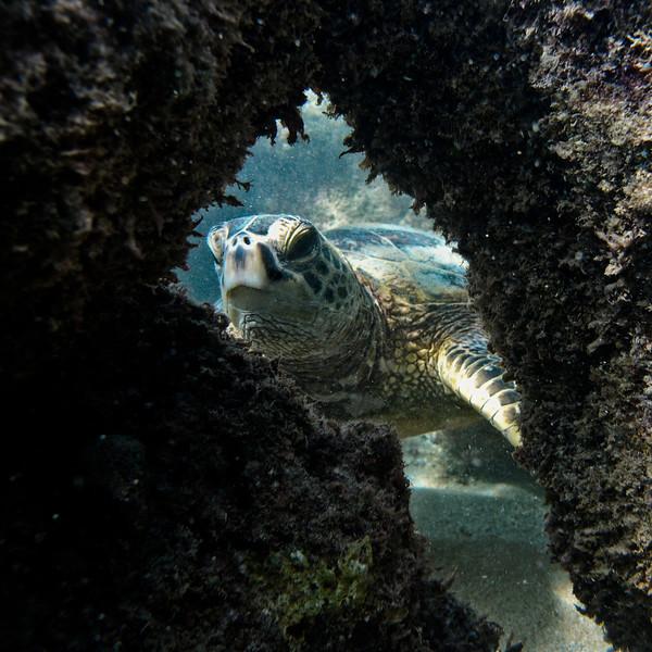 reef_framed-2.jpg