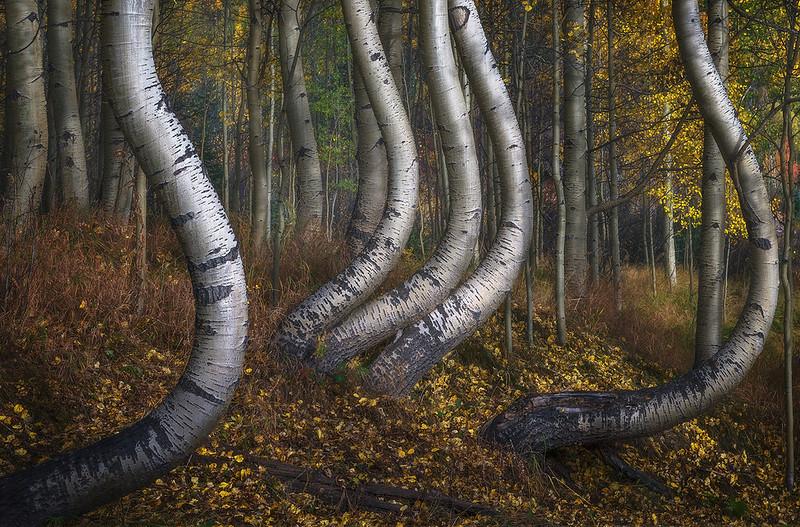 zzz (Unknown) - Curved Tree