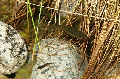 Reptiles, Amphibians, and Fish