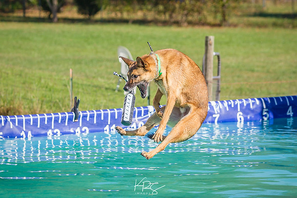Docktoberfest - Ultimate Air Dogs & Mid Atlantic Disc Dogs at Hog Dog Productions 10/22/2017