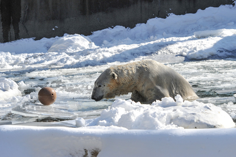 Tundra knows that if he pushes down the ice sheet, the ball rolls to him!