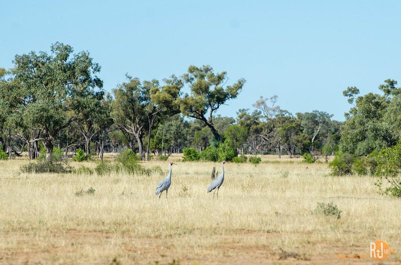 Australia-queensland-Cunnamulla-4314.jpg