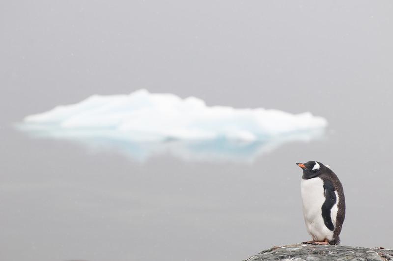 Antarctica 2015 (65 of 99).jpg