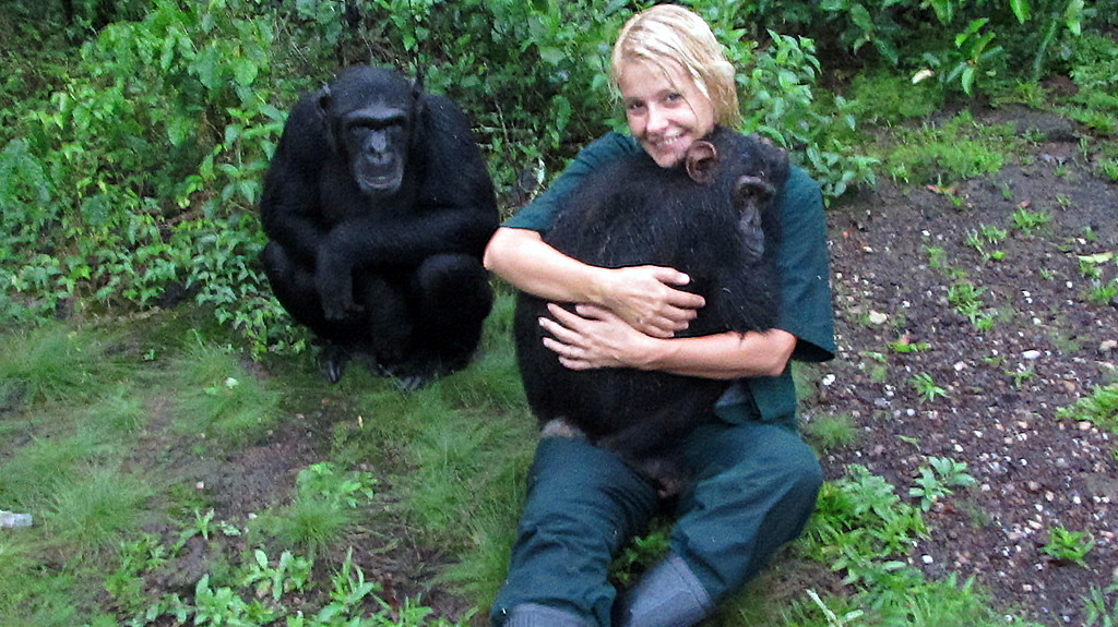Sarah with the Chimpanzees on her Adult Gap Year