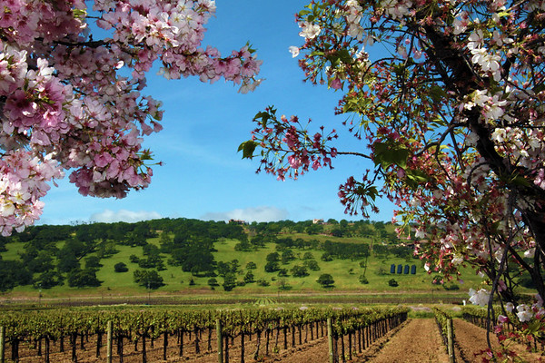 Suisun Valley, Rustic Wine Country Right Outside of Napa