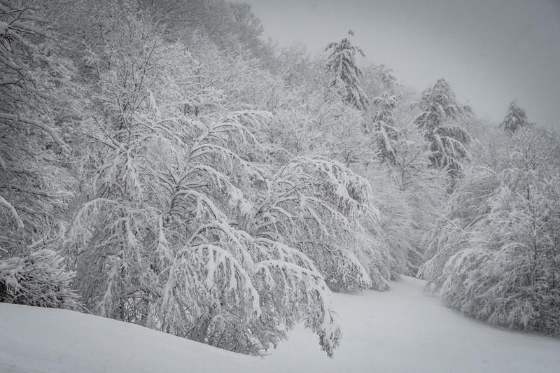 November 2018 Snowfall-_5009232.jpg