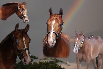Empire friends horses