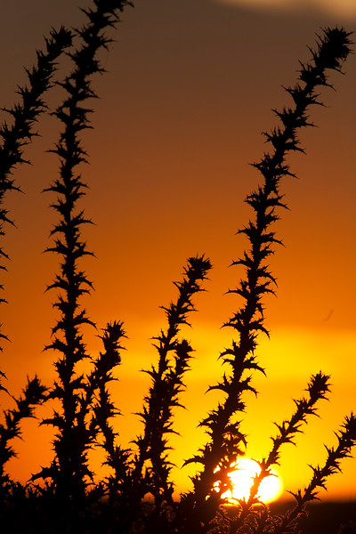 Sunset in Doñana marshland, town of Sanlucar de Barrameda, province of Cadiz, Andalusia, Spain.