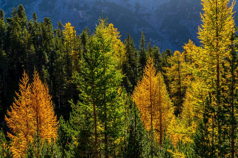 Herrliche Herbstfarben