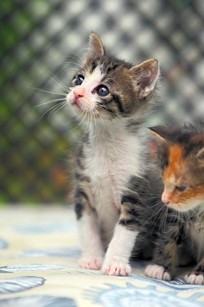 kittens_014-1.jpg