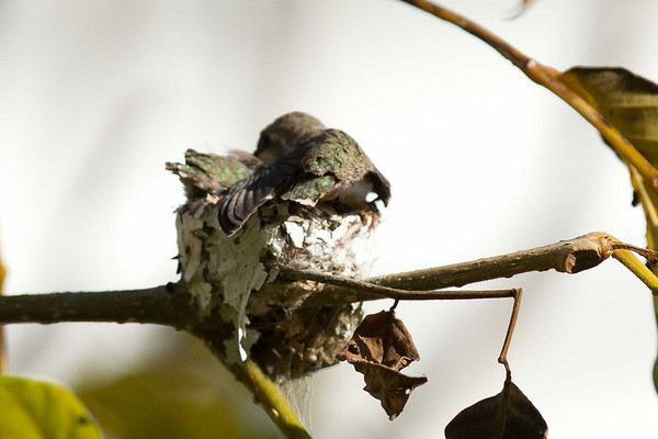 Humming Bird Nest Cat and Dog  3-28-2011