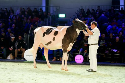 Swiss Expo Holstein Jr Cows 2019