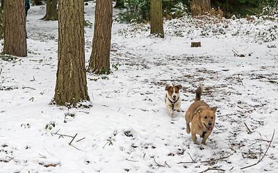 Snowy Stapleford Woods Dog Walk