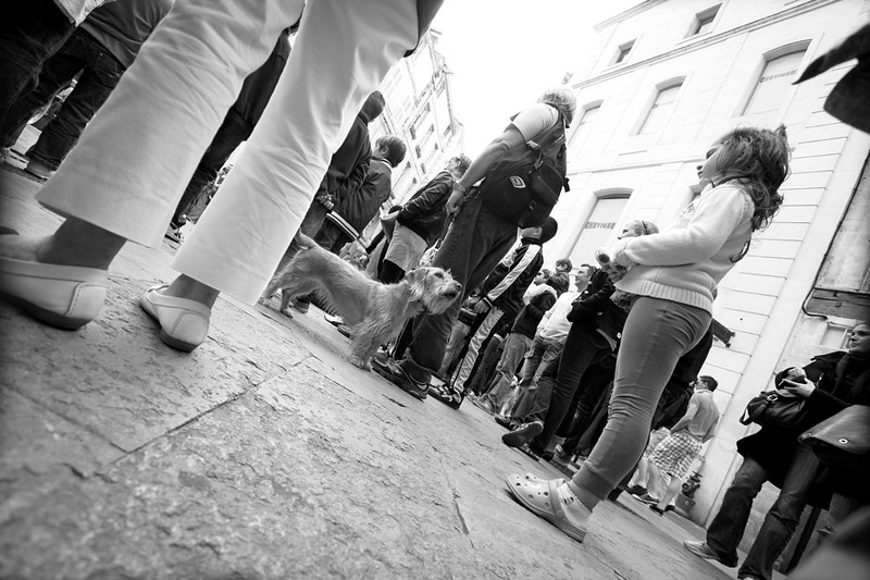 Hello there! - La Rochelle - Observational
