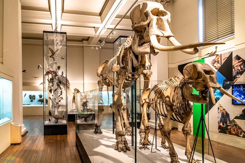 Australia-Museum-1390.jpg