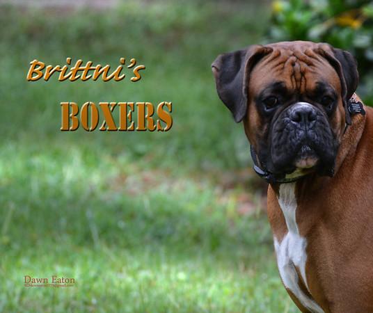 Brittnis Boxers