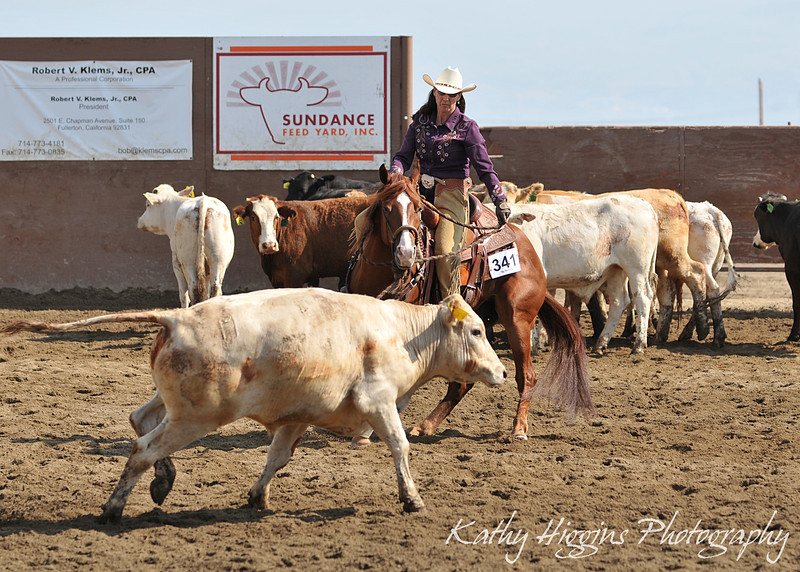 Amateur Herd Work