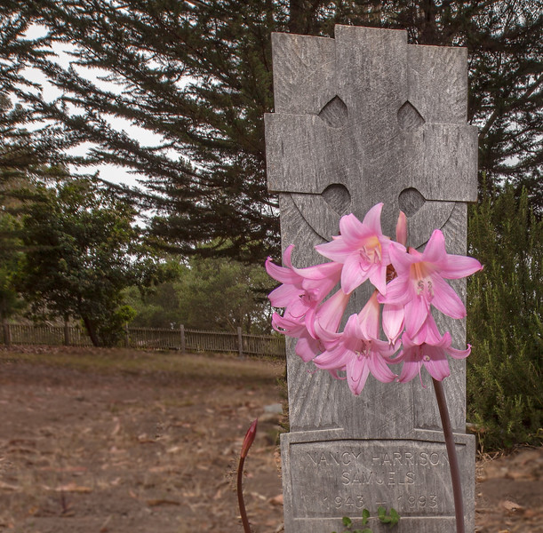 Naked Lady Flowers and Tombstone, Pt Reyes CA