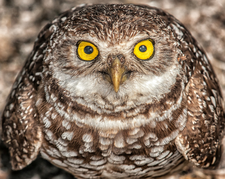 Various Owl Photos - March 9, 2012