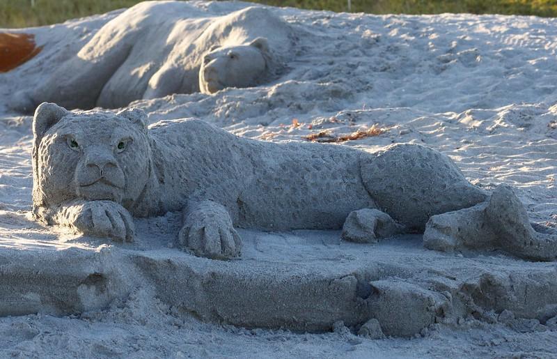wild animals at the beach