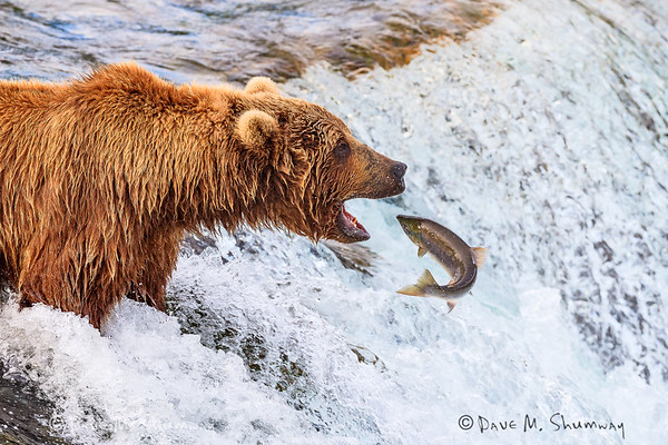 Katmai National Park (July, 2016)