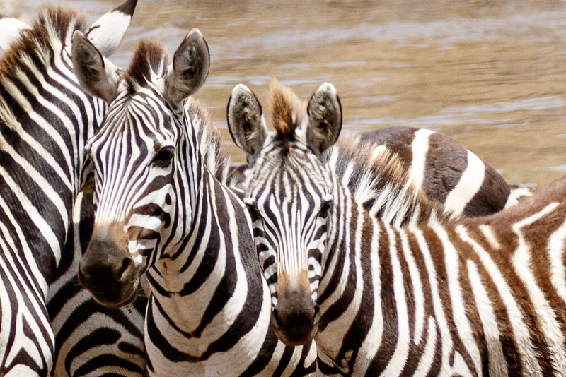 Kenya 2015-04646.jpg