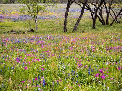 Wildflowers 2014