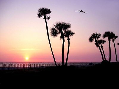 Florida 2005