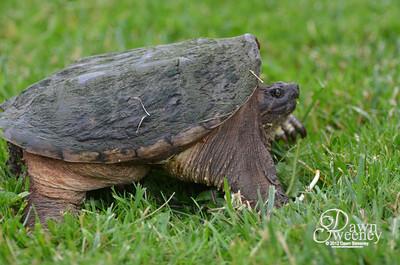 june 2012 turtle