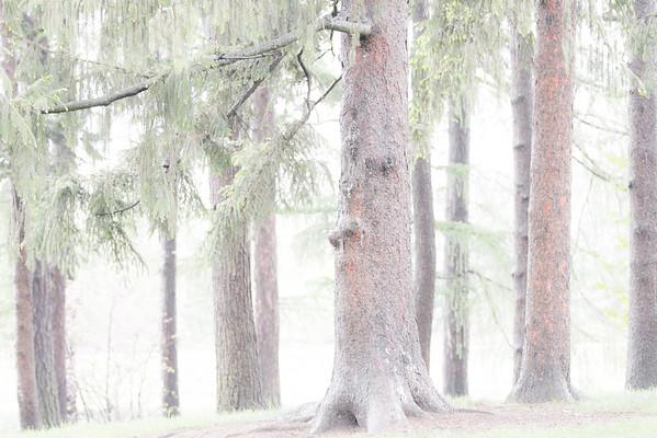 5-Morton Arboretum