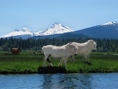 BBR Horses