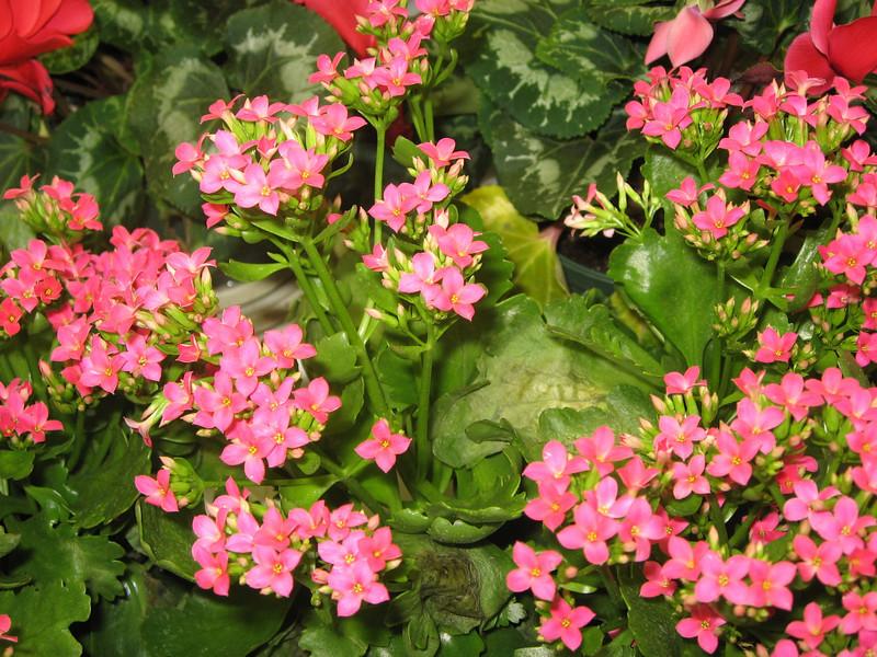 Easter 2011 054.jpg