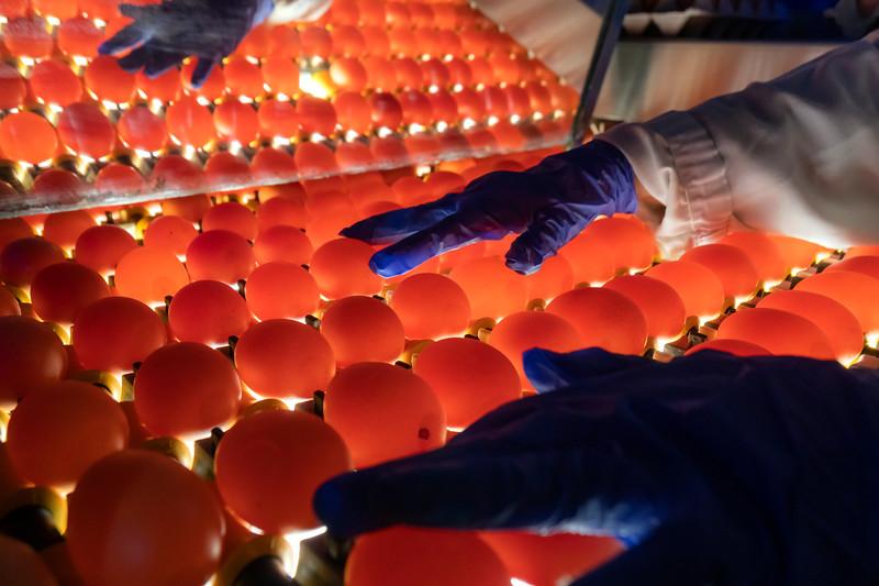 Eggs 32.jpg