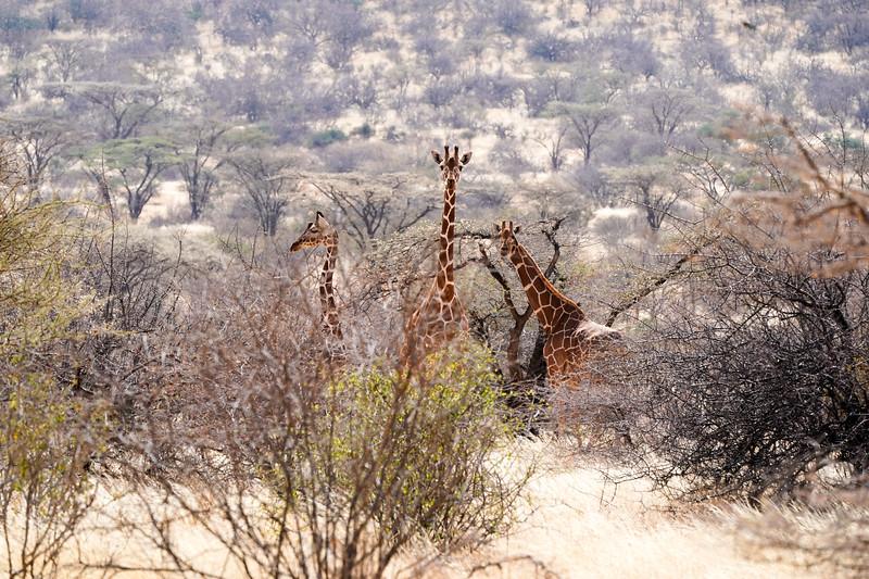 safari-2018-2.jpg