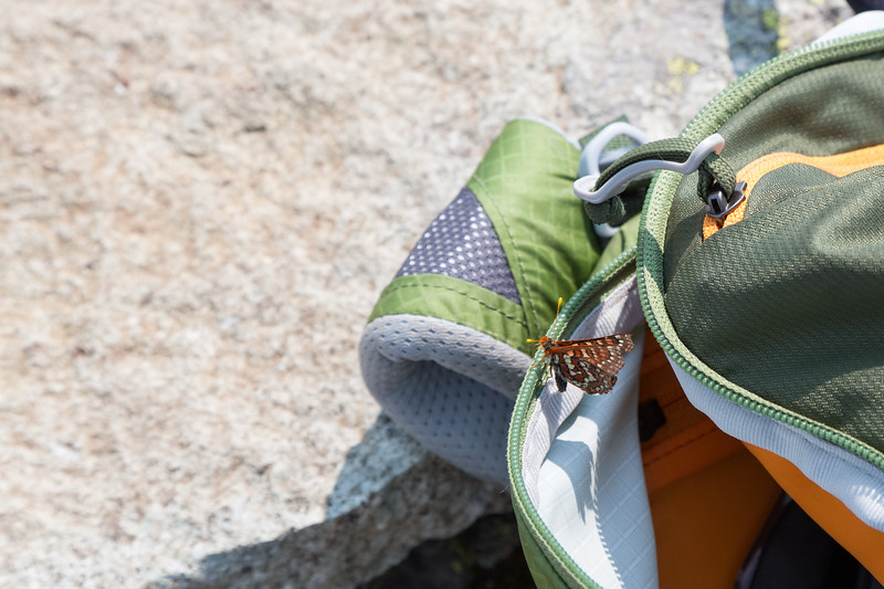 Proof that not all insects on this hike are complete jerks.
