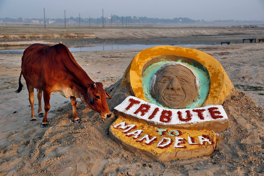. A cow stands near a sand sculpture of Nelson Mandela made by few Indian students at Sangam, the confluence of the Rivers Ganges, Yamuna, and the mythical Saraswati, in Allahabad, India, Saturday, Dec. 7, 2013. (AP Photo/Rajesh Kumar Singh)