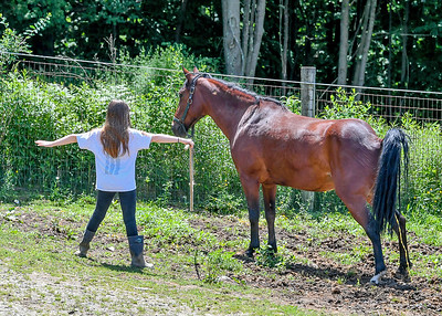 Teaching Horses to Urinate on Cue