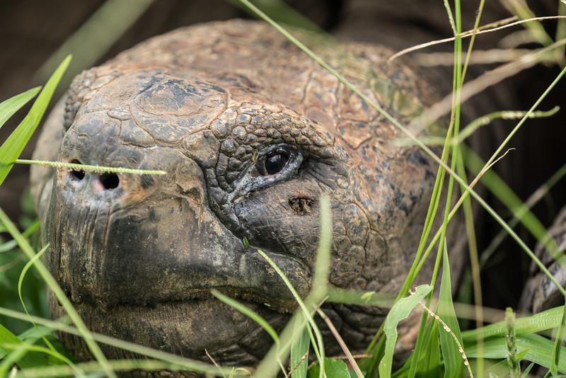 Galapagos-Best-152.jpg