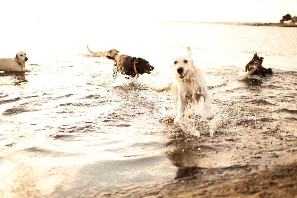 Dogsonbeach-AlexanderGardner-0007-20100614