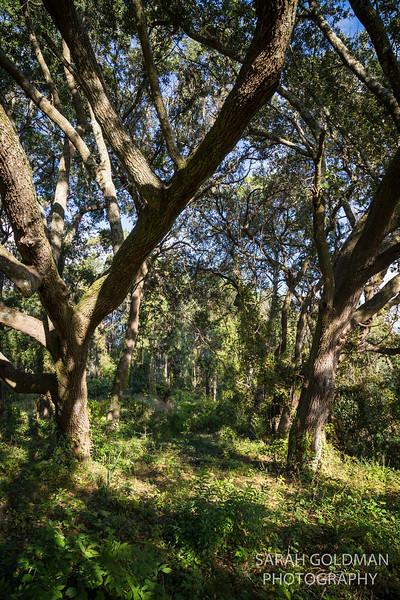 Pinckney Park James Island (5).jpg