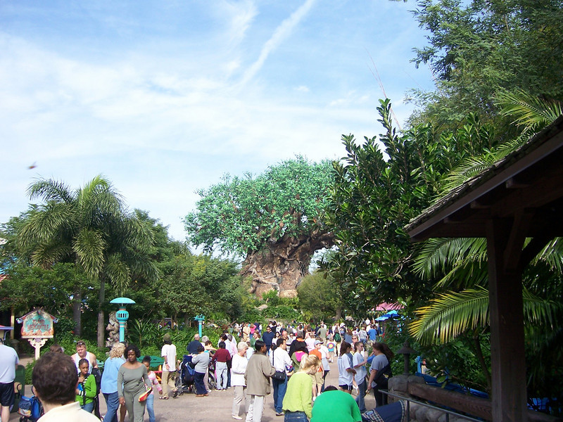 The Tree of Life (or something like that) - Disney Animal Kingdom.