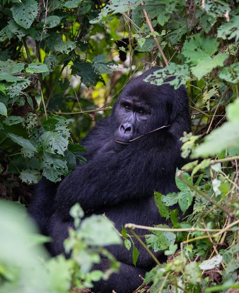 Uganda_T_Gor-1332.jpg
