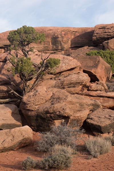 20160313 Canyonlands National Park 133.jpg