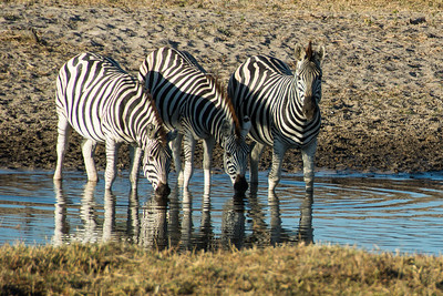 Okavango Delta, Moremi, and Makgadikgadi Pans - Botswana Safari and Lodges