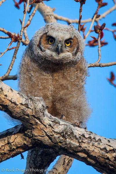 Owl-8.jpg